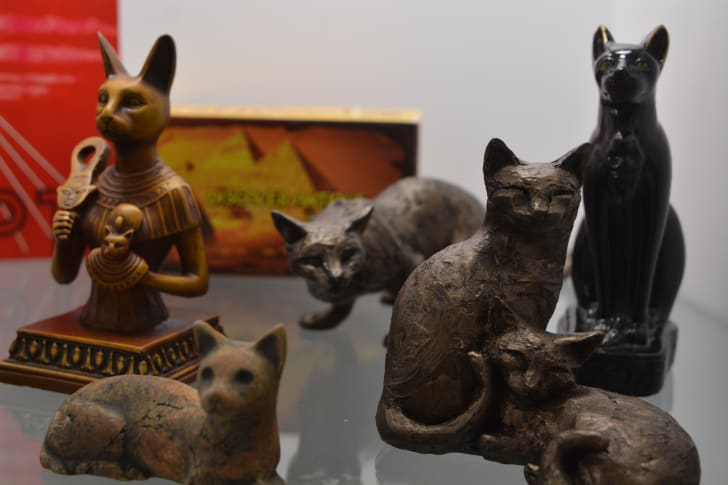 Artifacts at the American Museum of the House Cat