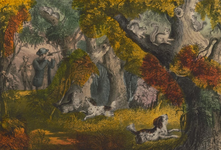 A colored lithograph shows men and dogs hunting squirrels in a forest.