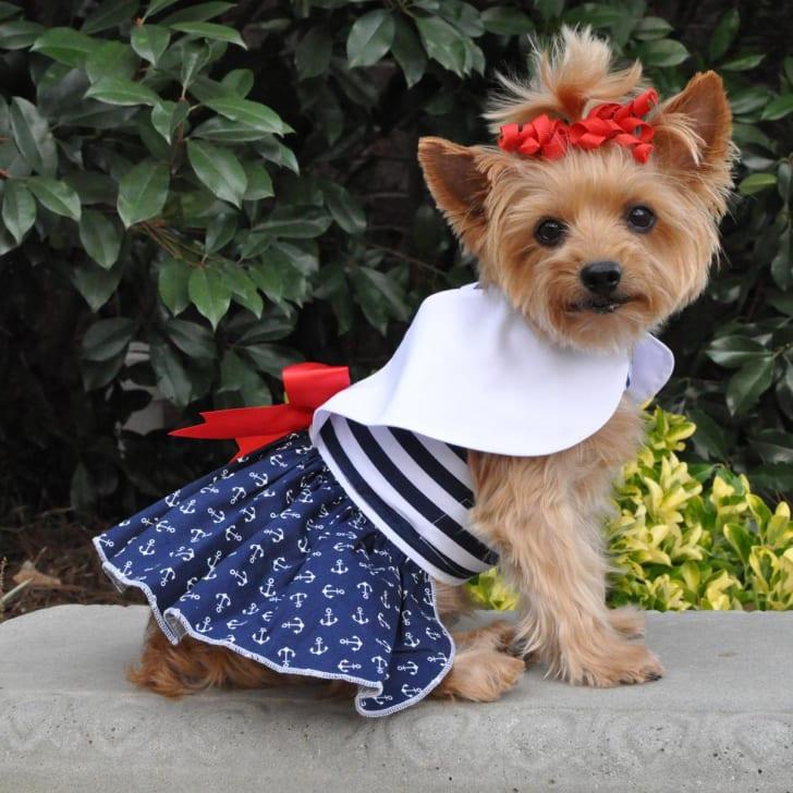 Dog sailor dress