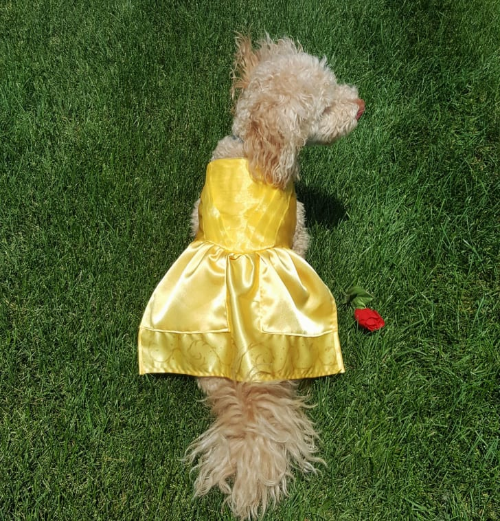 Dog Belle Dress