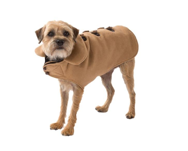 dog in coat