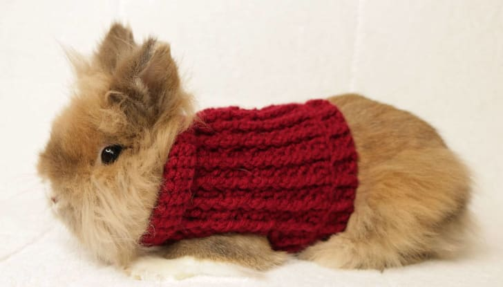bunny in a sweater