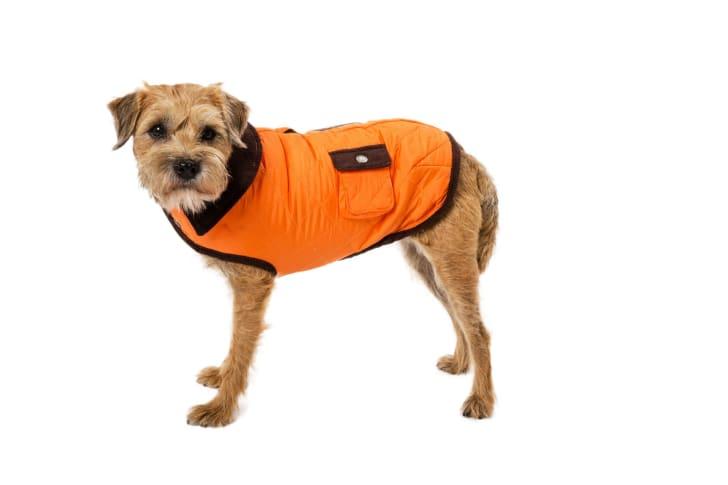 Dog in barn coat