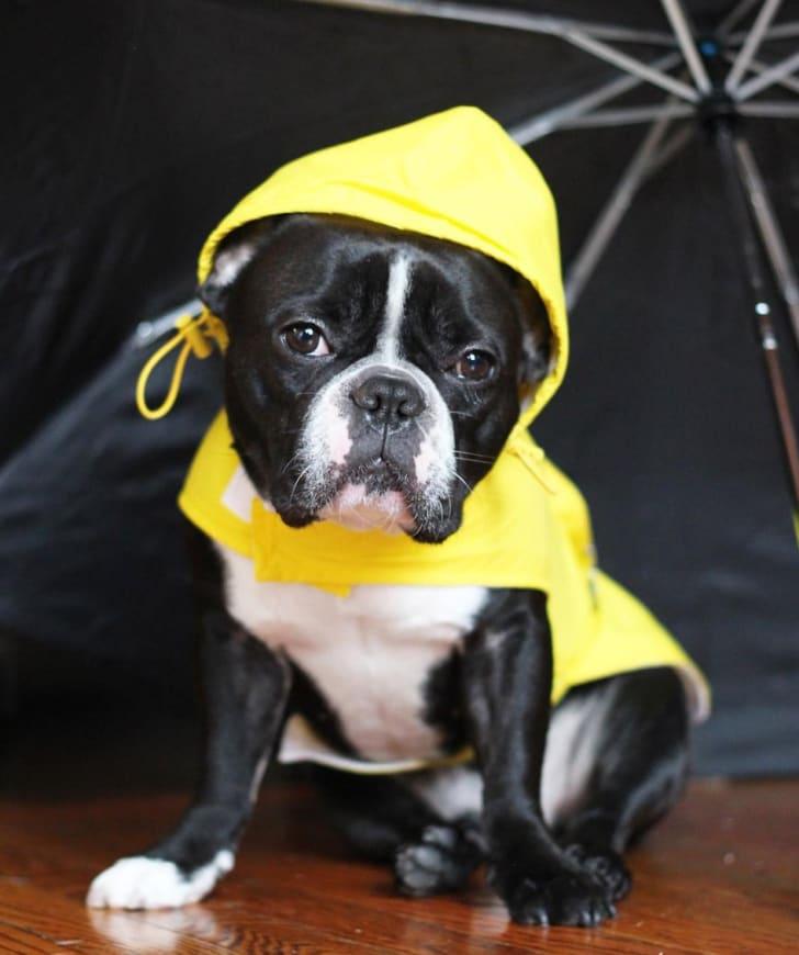 Fab Dog Travel Raincoat