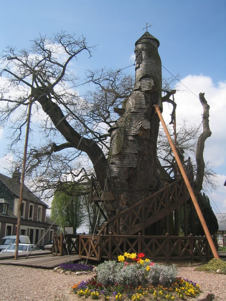 A towering oak tree with a spiral staircase and two chapels carved into it.
