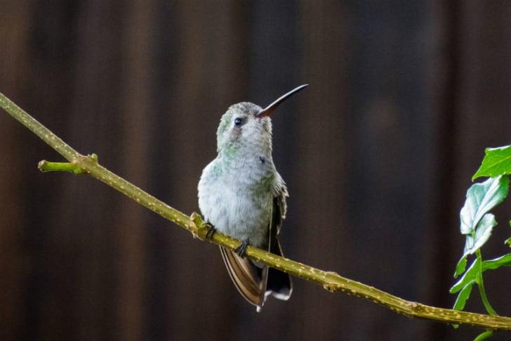 A hummingbird looks up into the sky