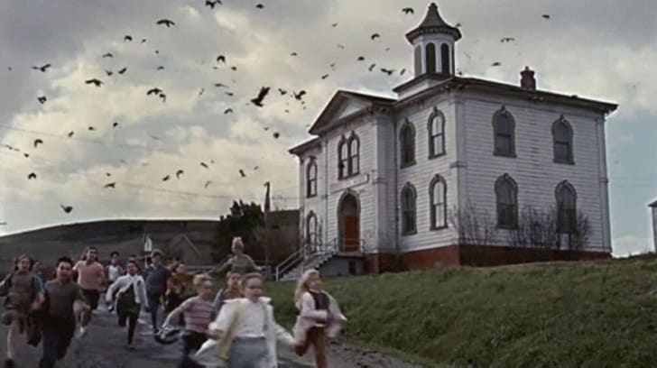 A scene from The Birds (1963)
