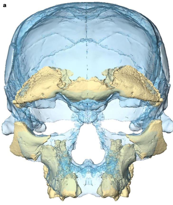 facial reconstruction of 300,000-year-old skull found in Morocco