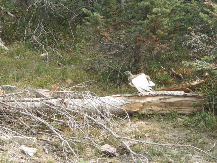 bird in woods