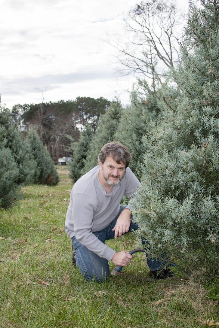 A man cutting down a Christmas tree