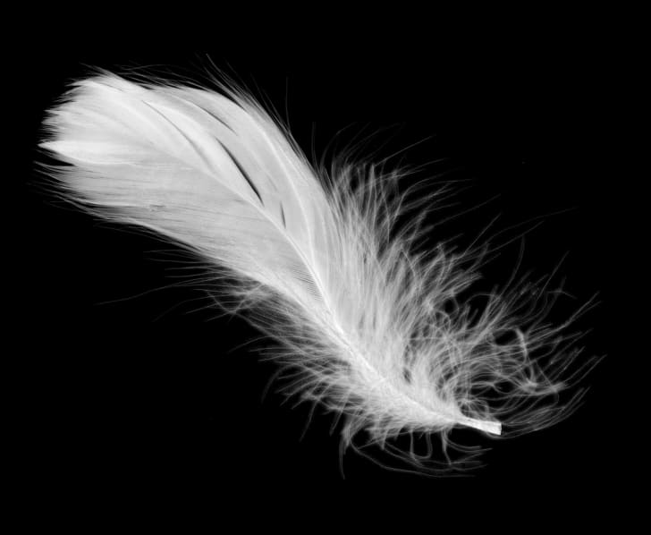 A white feather on a black background.