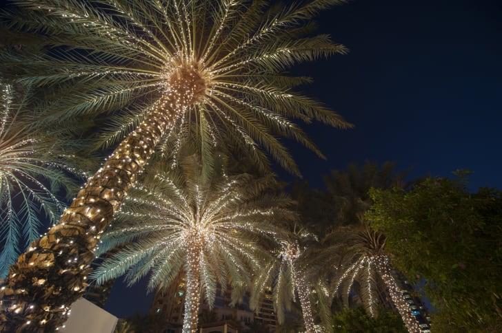 Christmas Palmetto Trees