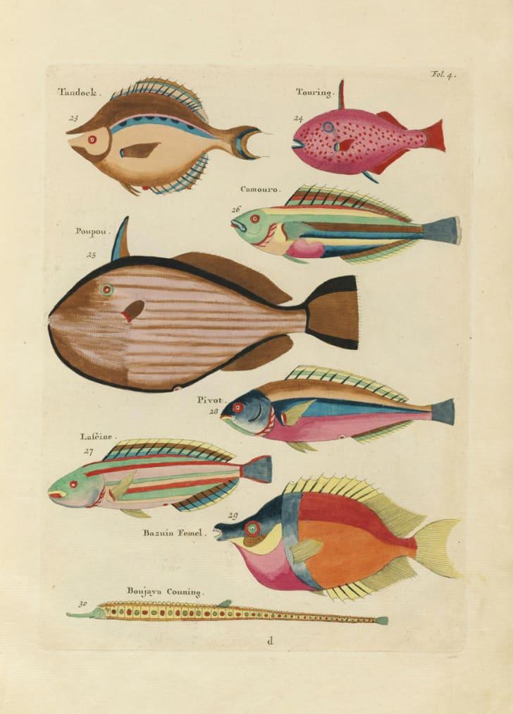 "Louis Renard's ""Fish,"" Folio 4"