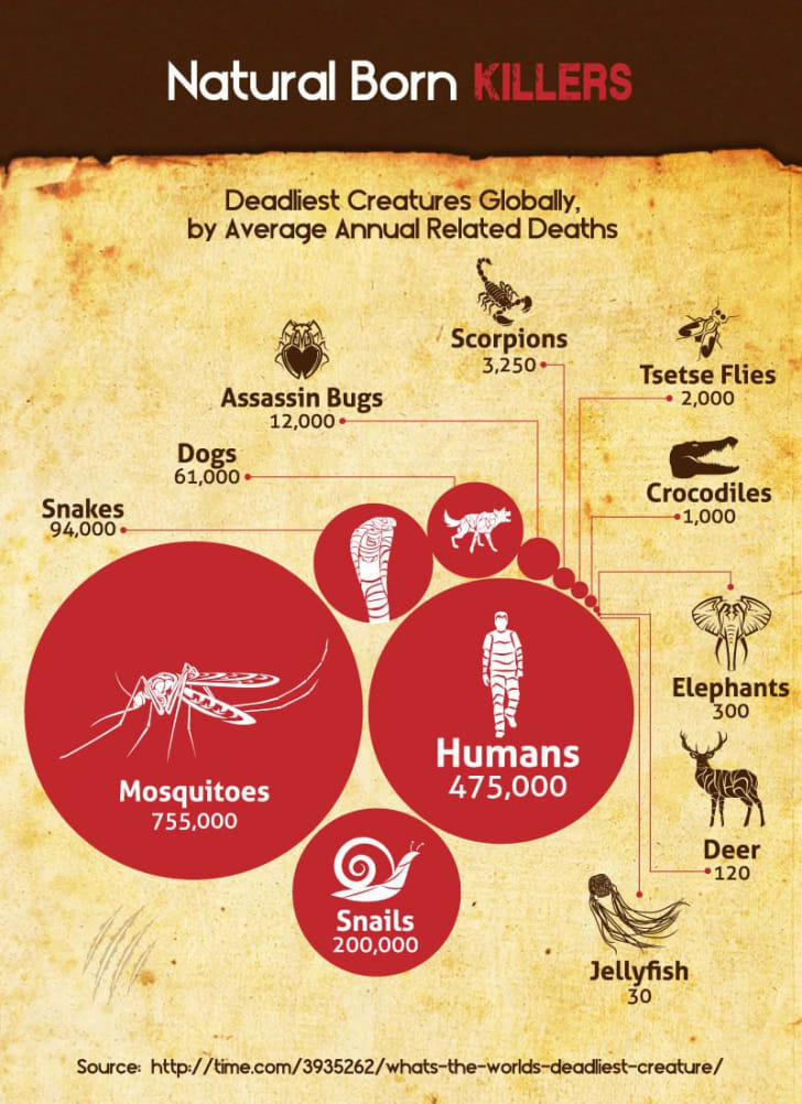 An infographic of the deadliest species globally