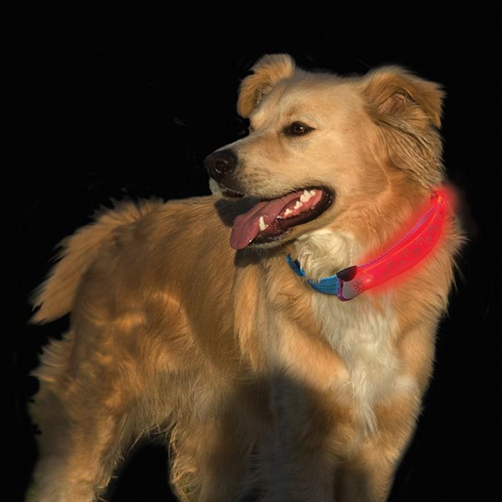 Dog wearing an illuminated collar.