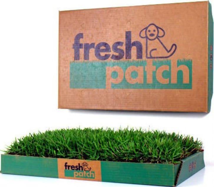 Patch of grass in a cardboard box.