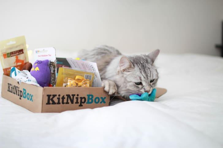 A gray cat sitting next to a KitNipBox