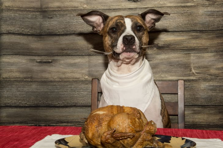 A dog sits at a table with a fork in its mouth, ready to eat the turkey in front of it.