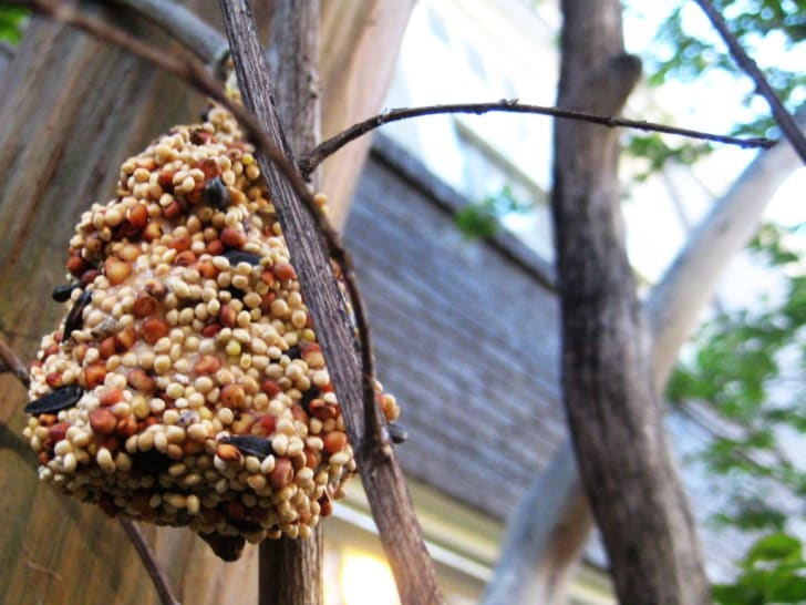 Homemade bird feeder.