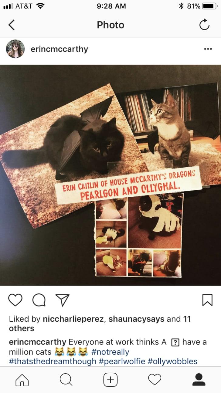 Instagram screenshot of cute cats.