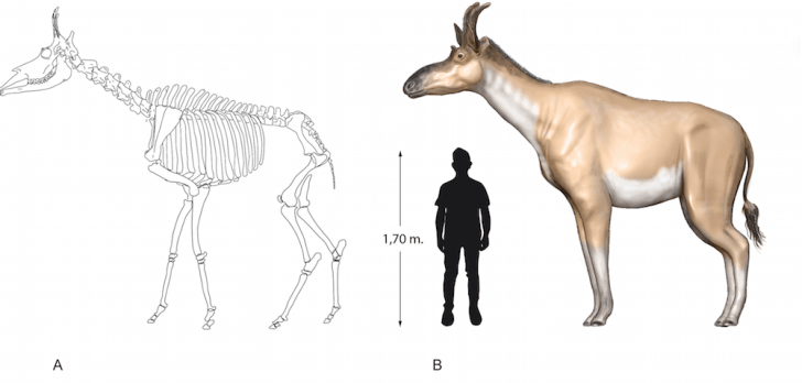 Artist rendering of giraffe relative.