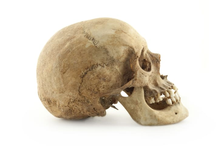 profile of human skull