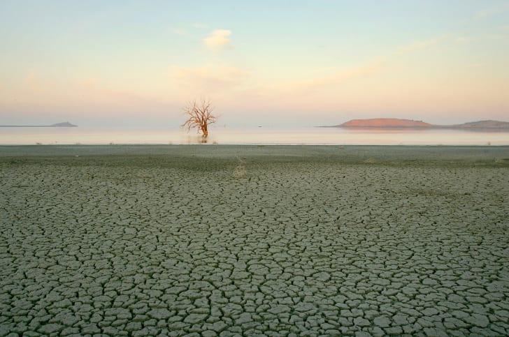 playa and lone tree at salton sea shore