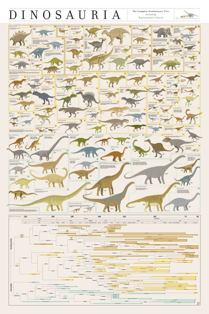 Chart of illustrated dinosaurs.