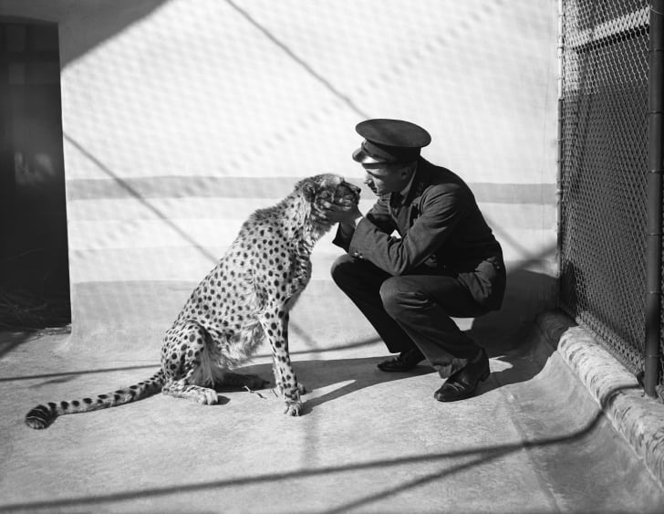 A zookeeper befriends Felix the cheetah on September 30, 1930. Location unknown.