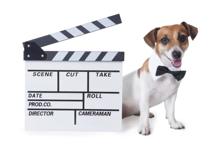 A dog wearing a bowtie, standing behind a slate for a movie.