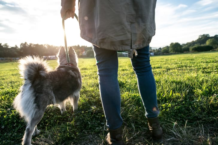 A woman walking a dog in the park.
