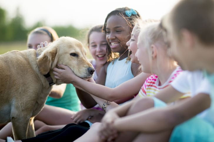 A group of kids petting a dog.