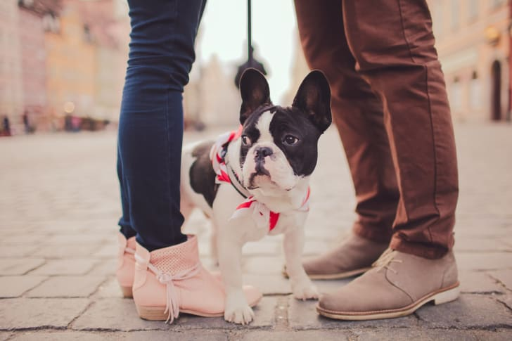 Two people from the knees down standing close together with a black and white dog between them.