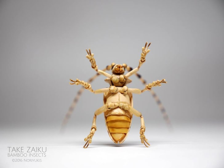 Bamboo insect.