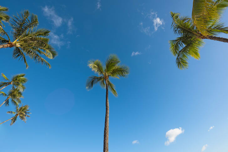 Blue skies and coconut trees in Hawaii.
