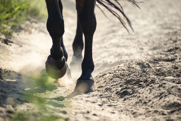 Close up of a black horse's hooves as it walks through the dirt.