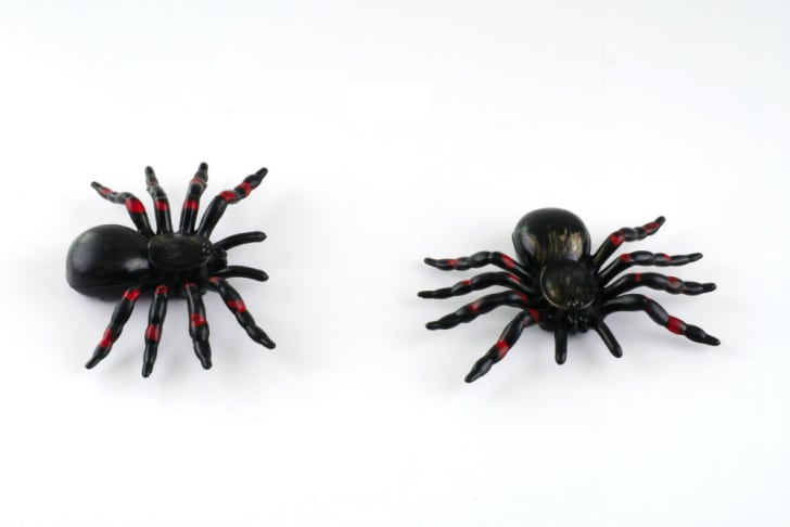 Two toy spiders await their chance to freak someone out