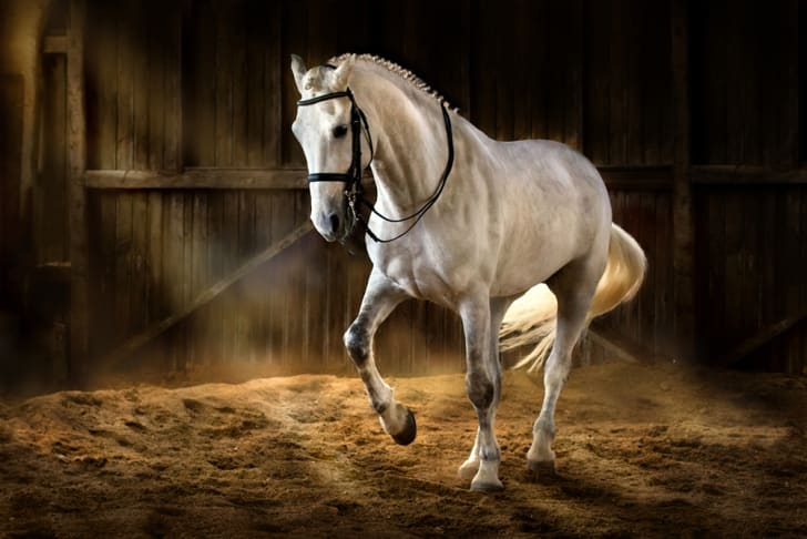 A white horse in a barn
