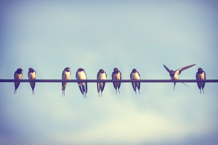 A group of birds on a power line.