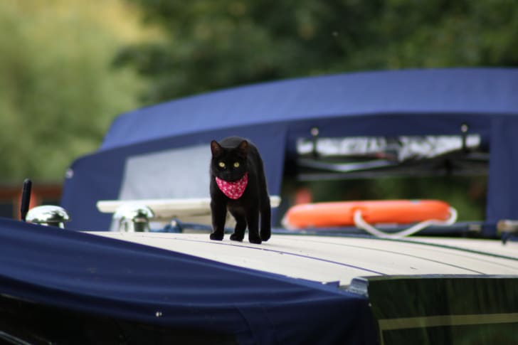 A black cat on a boat.