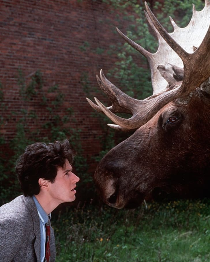 Rob Morrow and Morty the Moose in 'Northern Exposure'