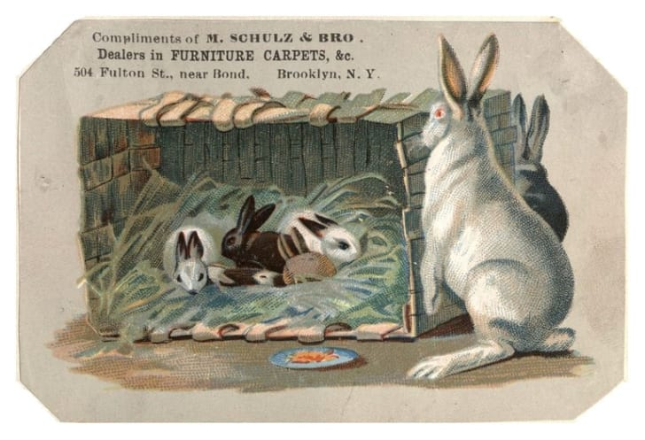 Illustration of bunnies in a in a crate