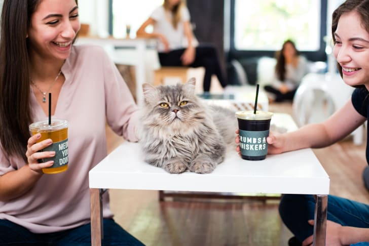 Washington, D.C. customers stroke a furry feline while enjoying coffee at cat cafe Crumbs & Whiskers.