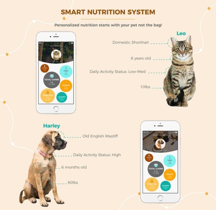 An example of PetMio's analysis of pet needs
