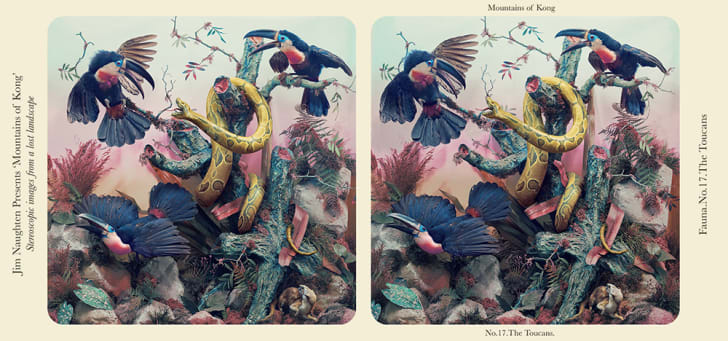 Toucans fight a snake in two almost-identical side-by-side images.
