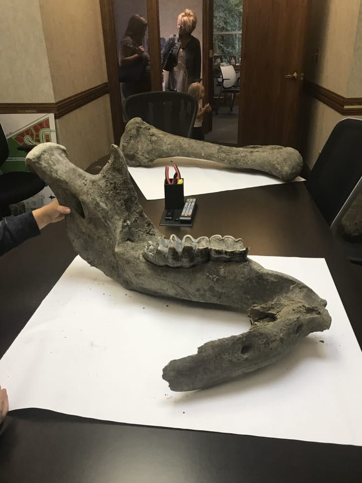 Construction workers in Michigan unearthed the remains of a mastodon skeleton, estimated by experts to be around 10,000 years old.
