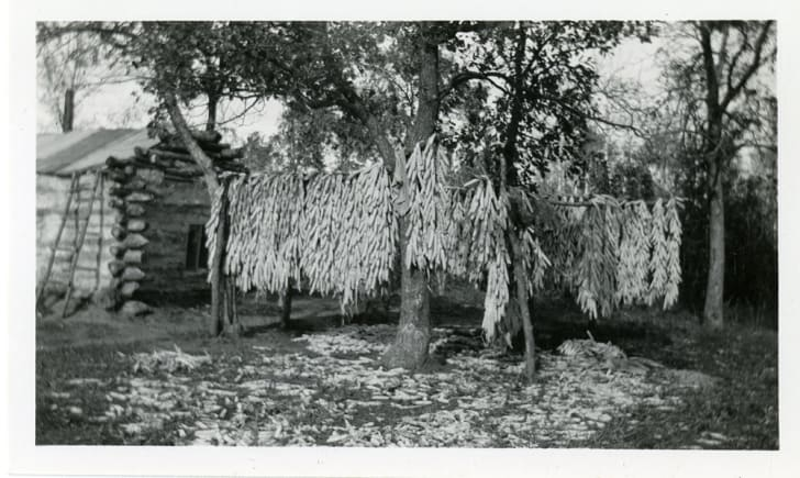 Corn dries in front of a log cabin.
