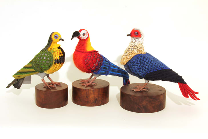 Three taxidermied birds are covered in crocheted costumes making them look like extinct species.