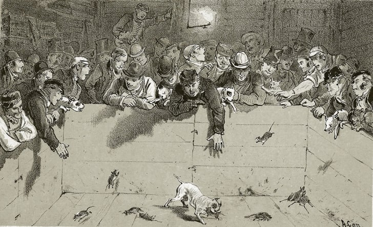 An illustration of a group of Victorian men watching rat-baiting.