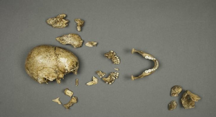 17th century human remains found in Jamestown, Virginia